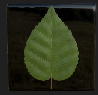 Detail: birch leaf